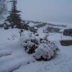 Snow,snow snow....